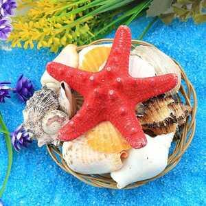 - Dekoratif Sepetli Deniz Kabukları